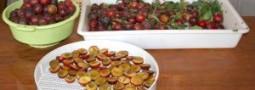prunes sèchées