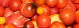 Pasteurisation du coulis de tomate