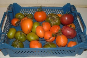 coulis tomate12_redimensionner