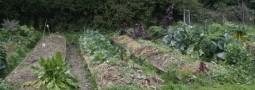 la chimie au potager, comment identifier votre sol en fonction de la végétation