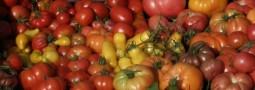 La poudre de tomate