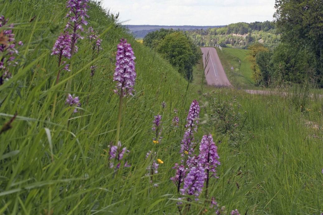 Redimensionnement de Redimensionnement de orchidees vaurois mai 2006