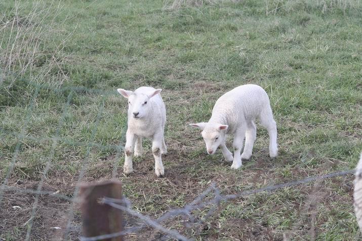 agneaux 2009 2