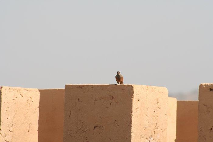 700_oiseauoasis