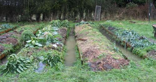 jardin inondé